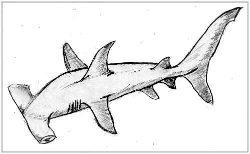 The gallery for requin dessin - Dessin requin marteau ...